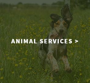 AnimalServices